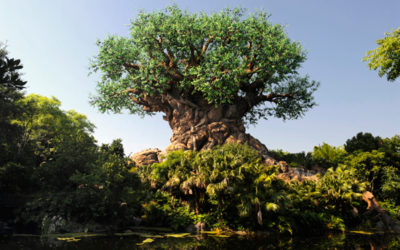 Animal Kingdom's Park Preview Experience